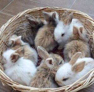 I am looking for a small female rabbit