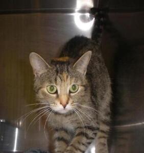 "Adult Female Cat - Torbie: ""Rizzo 16 (London)"""