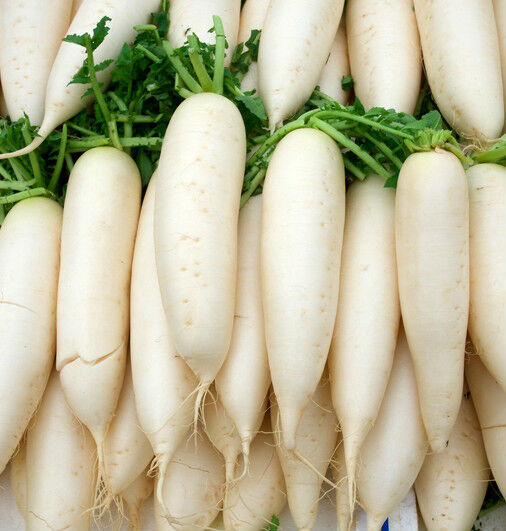 Raw Food Radish Recipes