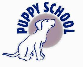 Puppy School Puppy training classes!