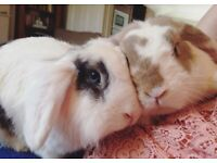 2 rabbits- Becky & Fred