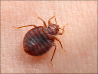 BED BUGS EXPERTS (REGISTERED) TREATMENT & PROACTIVE FOLLOW UP