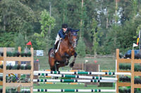 Training rides/regular exercise rides for your horse