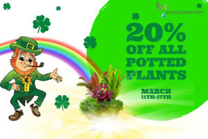 St. Pat's Day is Here! 20% off All Live Potted Aquarium Plants