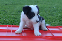 CUTE ADORABLE PUPPIES LOOKING FOR A GOOD HOME!