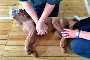PET FIRST AID/CPR TRAINING