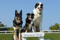 Basic Obedience Course at Winstead Dogs