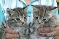 Kittens have all found homes! Thanks!!