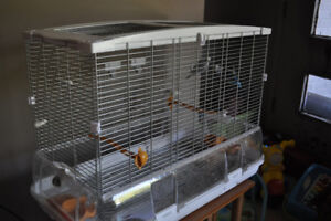 "2 budgies with big cage ""Pip and SqueaK"""