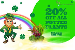 St. Patty's Sale Extended on Live Potted Aquarium Plants 20% Off