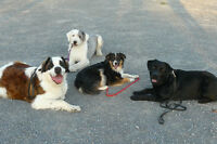 Basic Obedience Dog Training - Winstead Dogs