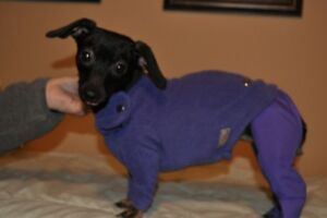 full body dog clothing