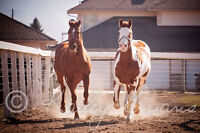 Horses for lease in Oyama, BC