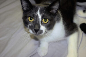 2-year-old Rescued Female Cat Needs Fur-Ever Home! London Ontario image 10