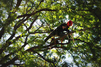Tree Care, Removals and Pruning