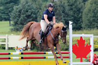 Riding Lessons Booking Now Adults Children Sat Horse Club