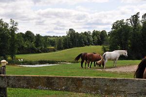 Hobby Farm For Sale Near Ottawa Ontario Kingston Kingston Area image 7