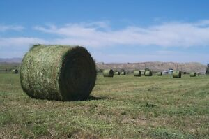 Dry land hay for sale