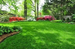 ✳NW Professional Weekly & Biweekly Lawn Mowing - Great Prices!✅