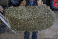 NO Rain, excellent horse hay, limited amount left