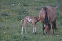 Beautiful Quarter Horses needing FOREVER Homes!