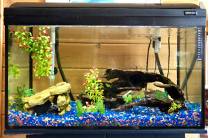 Cichlids in 33-gallon fish tank, with pump and accessories