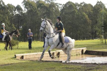 Beginners Trail Horse. 15.2hh OTT TB - 'Charlie' Duns Creek Port Stephens Area Preview