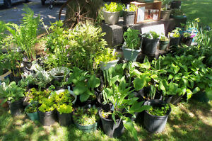 PERENNIAL PLANTS AND BERRY PLANTS