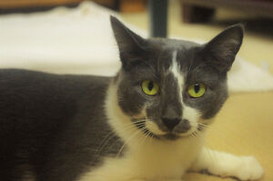 2-year-old Rescued Female Cat Needs Fur-Ever Home! London Ontario image 3