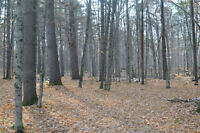 Spectacular 2 acre treed building lot in White lake