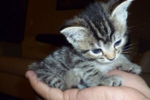 PLAYFUL,ADORABLE KITTENS IN NEED OF GOOD HOME