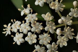 Elderberry Blossom Suites - Nightly/Weekly Rentals