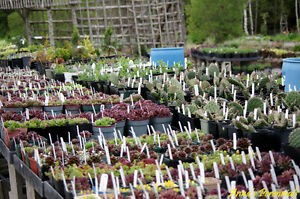 Anna's Perennials-Local Grower