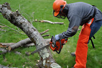 TREE CUTTING AND REMOVAL SERVICES, LITTLE JOBS WELCOME
