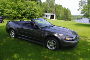 Mustang - 40th Anniversary Edition