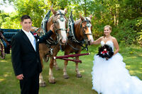 Horse Drawn Carriage Special for your Wedding
