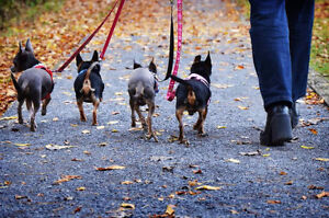 Pension canins