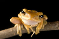 Looking for owners of Amphibians!