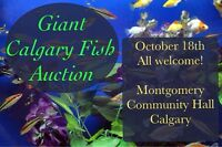 Giant Fish Auction in Calgary