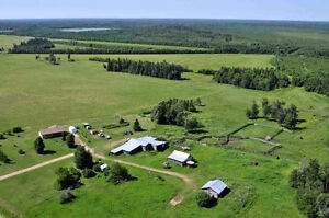 Cattle Farm between Thorhild & Athabasca