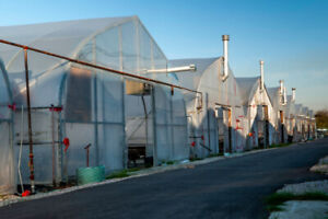 Greenhouse and Material for Sale