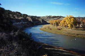 Bison & Guest Ranch For Sale