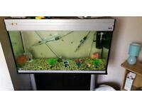 Fish tank with stand and fish plus spare tanks
