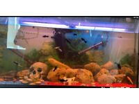Tank with fishes for sale! (250l)