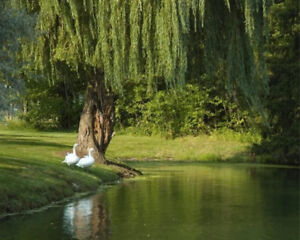 Great Deal! 2  for 1 - Burial Plots at Pleasantview – Fonthill