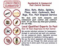 Pest Control Plaistow, Forest Gate, East Ham, Ilford, Newham, Newbury Park, Gants hill, All London