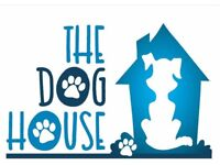Dog boarding and day care - offering a home from home situation