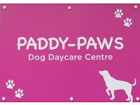 Paddy Paws Doggy Day Care! Fully Insured and Licensed