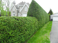 FALL AND WINTER HEDGE TRIMMING SERVICES - 20% OFF NOW