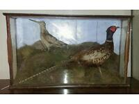 Taxidermy Pheasant and Woodcock
